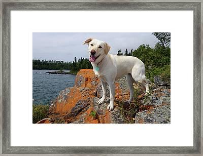 Betsy On Horseshoe Bay Island Framed Print