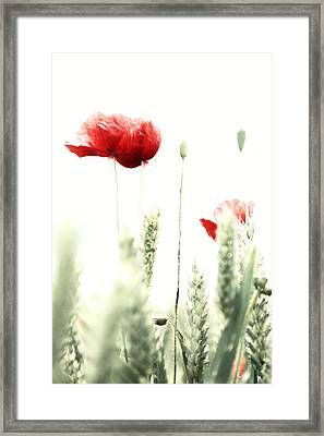Poppy Framed Print by Falko Follert