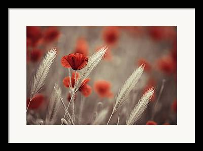 Poppy Art Framed Prints