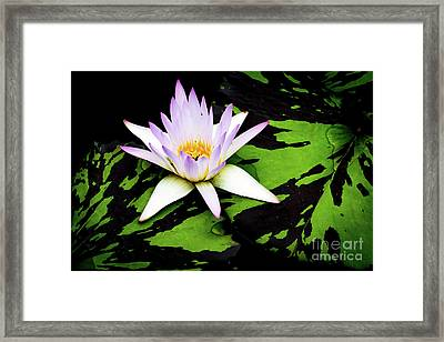 Water Lilies And Lily Pads Framed Print