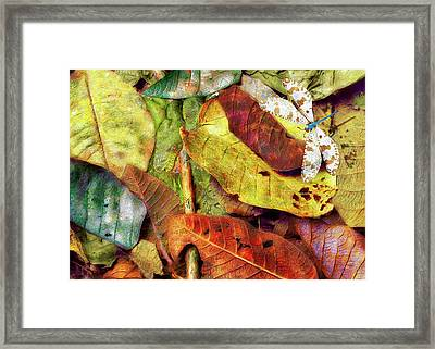 Who's On First Framed Print