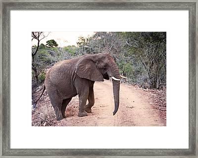 1109 African Roadblock Framed Print by Steve Sturgill