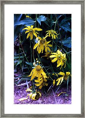 111 Degrees Framed Print by Heather S Huston