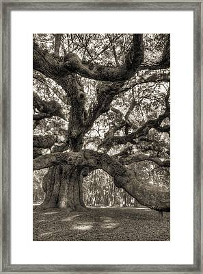 Angel Oak Live Oak Tree Framed Print by Dustin K Ryan