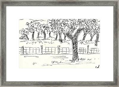 Cork Oaks Framed Print