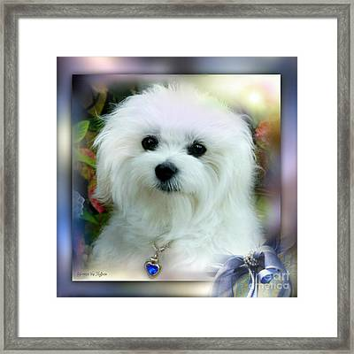 Hermes The Maltese Framed Print
