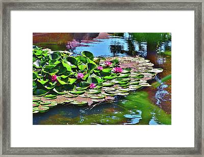 12 Lily Pond With Water Reflections Framed Print