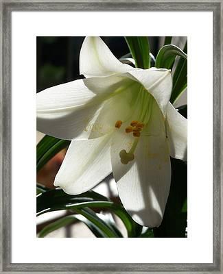 Summer Bloom Framed Print by Jake Hartz