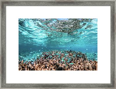 Underwater Coral Reef And Fish In Indian Ocean, Maldives. Framed Print