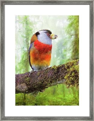 Toucan Barbet Framed Print