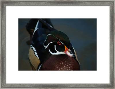 121609-325 Framed Print by Mike Davis
