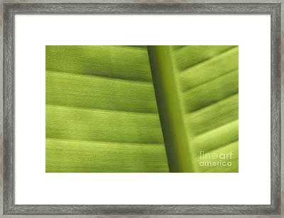 Abstract  Framed Print by Tony Cordoza