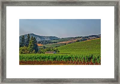 California Vineyard Framed Print by Mountain Dreams