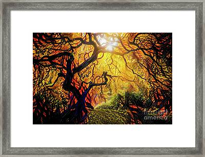 14 Abstract Japanese Maple Tree Framed Print