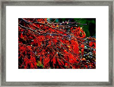 Autumn Colors Framed Print by Aron Chervin