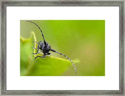 Bug Framed Print by Andre Goncalves