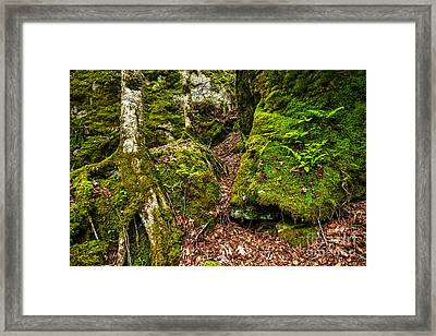 Cranberry Wilderness Framed Print by Thomas R Fletcher
