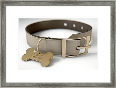 Leather Collar With Tag Framed Print by Allan Swart