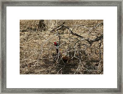 Hiding In The Trees Framed Print