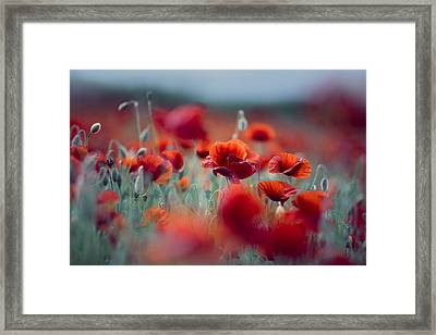 Summer Poppy Meadow Framed Print