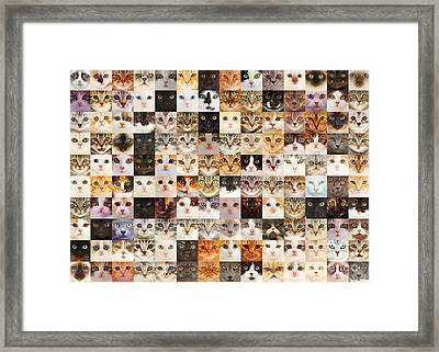 140 Random Cats Framed Print