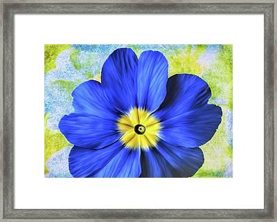 Blue Primrose Framed Print