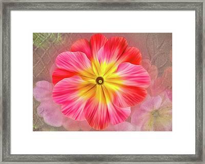 Pink Primrose #2 Framed Print