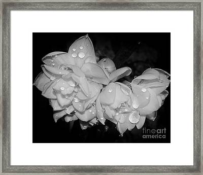 Framed Print featuring the photograph Flowers by Elvira Ladocki