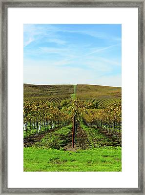 Napa Valley California Vineyard Framed Print by Brandon Bourdages