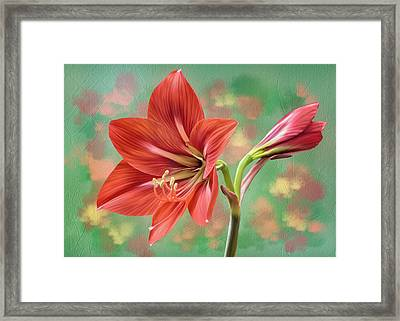 Amaryllis #1 Framed Print