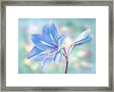 Amaryllis #2 Framed Print