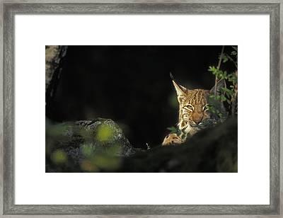 151001p105 Framed Print