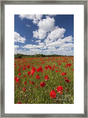151124p076 Framed Print