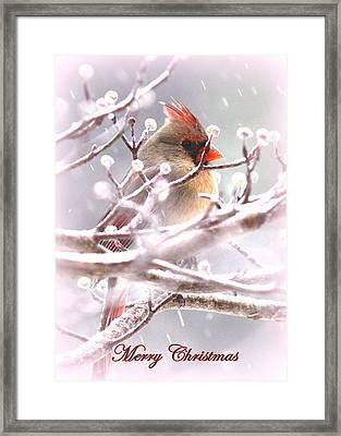 1554-003 Cardinal Framed Print