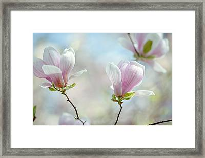 Magnolia Flowers Framed Print by Nailia Schwarz