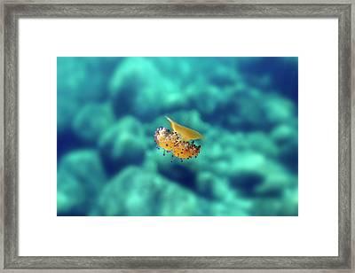 160820-9493 Framed Print by 27mm
