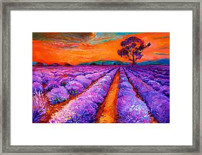 Lavender Fields Framed Print by Boyan Dimitrov