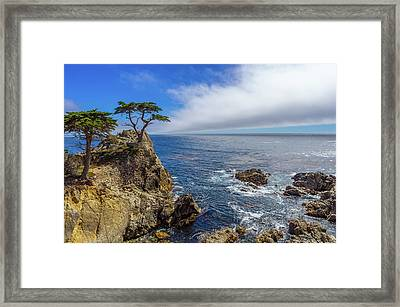 17 Mile Drive Pebble Beach Framed Print by Scott McGuire