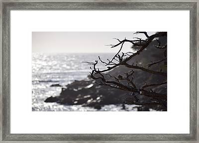 17 Mile Drive  Framed Print
