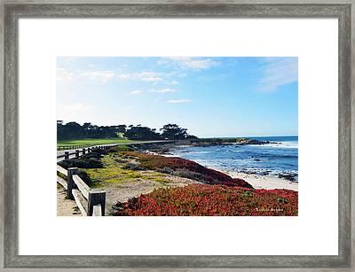 17 Mile Drive Shore Line Framed Print by Barbara Snyder