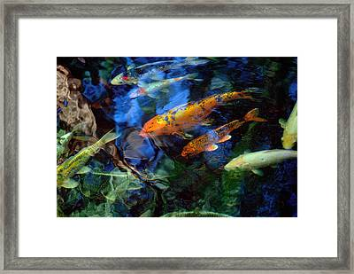 The Koi Pond Framed Print by Marc Bittan