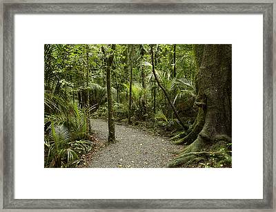 Walking Trail Framed Print by Les Cunliffe