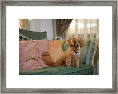 Cinnamon Framed Print by Alaz