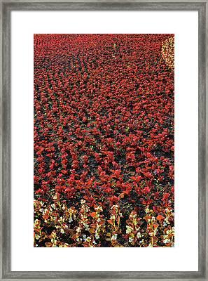 Flower Carpet. Framed Print by Andy Za
