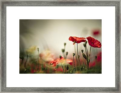 Poppy Meadow Framed Print by Nailia Schwarz