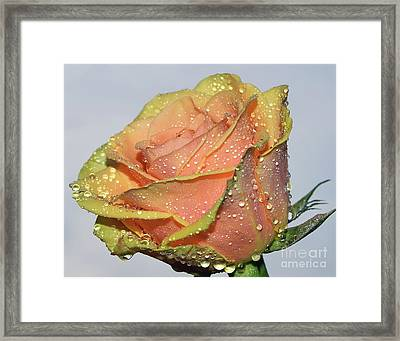Framed Print featuring the photograph Rose by Elvira Ladocki
