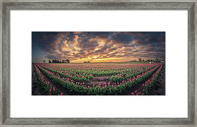 Framed Print featuring the photograph 180 Degree View Of Sunrise Over Tulip Field by William Lee