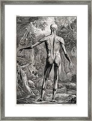 18th Century Anatomical Engraving Framed Print