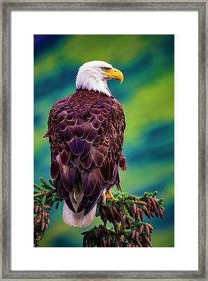 Framed Print featuring the photograph Bald Eagle by Norman Hall