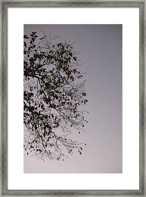 Branches Framed Print by Joseph Thiery